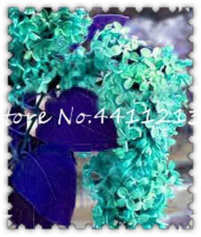 100Pcs Lila weißen Flieder Bonsai Lila Nelke Bonsai Blume Bonsai-Baum Bonsai Topfpflanze für Home Garten tropischer Gartendekoration: 21