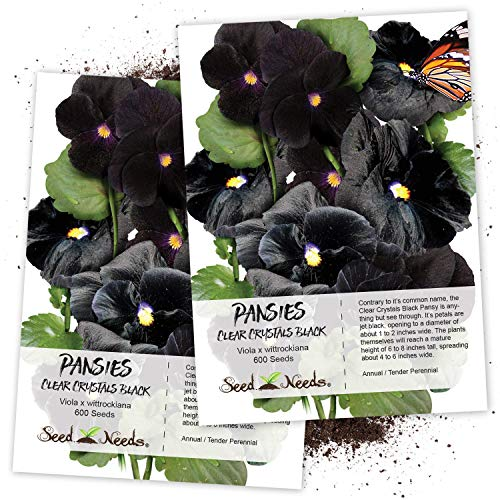 Seed Needs, Clear Crystals Black Pansy (Viola x wittrockiana) Twin Pack of 600 Seeds Each