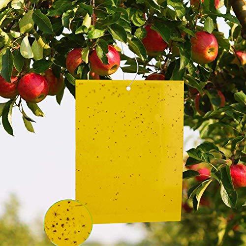 WELLXUNK Fliegenfalle Gelbstecker, 20 Stuck Gelbsticker doppelseitige klebrige Insektenfalle Naturen Fliegenfänger für weiße Fliegen, Blattläuse, Motten und Pilz-Mücken (20x25cm)