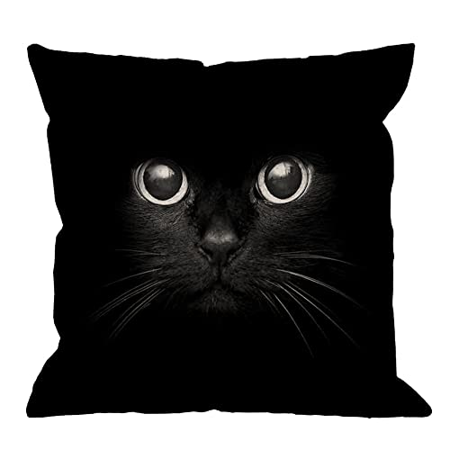 Black Cat Pillows  Amazon.com 5b46eb1bb1