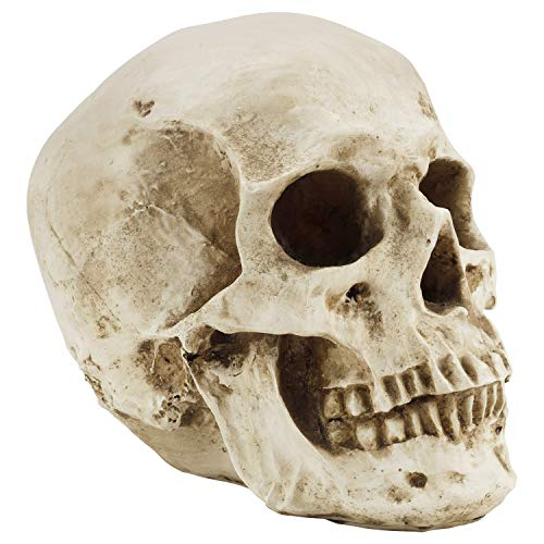 Kurtzy Human Skull Model - L12 x W17 x H14.5cm / 4.72 x 6.70 x 5.71 Inches - Realistic Resin Bone Medical Skeleton - Replica Life-Size Head for Anatomical Medical Teaching & Halloween Party Decoration