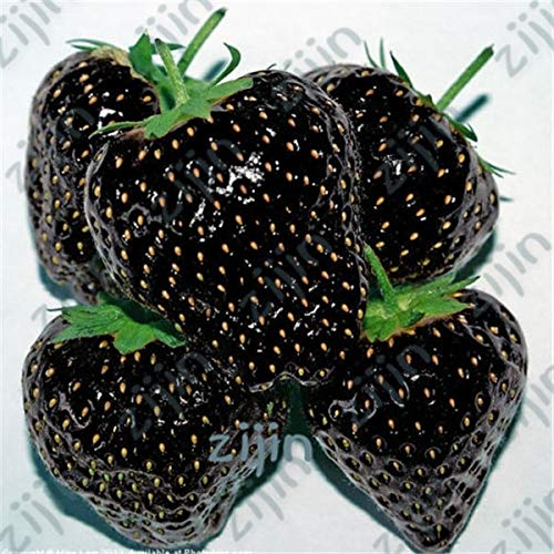 Delighted 300pcs Black Strawberry Bonsai Good Taste Fruits Healthy Fresh Exotic Bonsai Easy Care Bonsai Plants For Home Garden