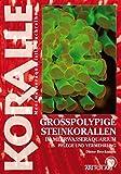 Großpolypige Steinkorallen Im Meerwasseraquarium: Pflege und Vermehrung (Art für Art / Meerwasser)