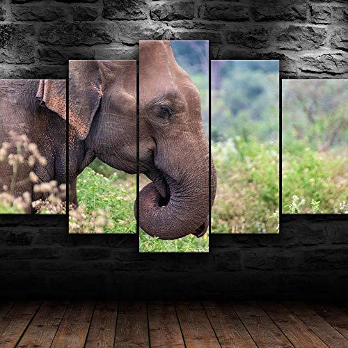 Impresiones Sobre Lienzo 5 Piezas Cuadros En Lienzo Modernos Dormitorios Murales Pared Lona Xxl Grande Hogar Cuadros Decoración Salón 150X80Cm Elefante Asiático Naturaleza Animal Regalo Navidad
