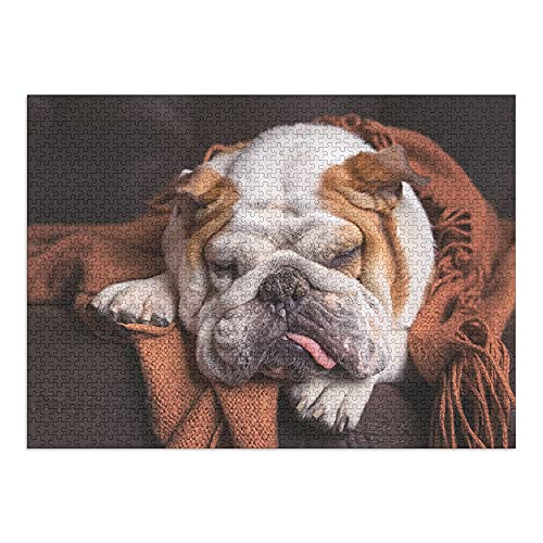 English Bulldog Sleeping on Couch Photography A-90753 (1000 Piece Premium Puzzle, Made in USA)