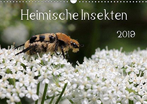 Heimische Insekten 2019 (Wandkalender 2019 DIN A3 quer): Nahaufnahmen von deutschen Gartenbewohnern (Monatskalender, 14 Seiten ) (CALVENDO Tiere)