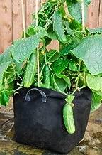 Cucumber Saladmore Bush, 20 Seeds Non-GMO
