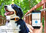 Motorola Scout Traks – GPS Tracker und Aktivitätstracker für Hunde und Katzen – Inkl. 1 Jahr Abo, schwarz - 13