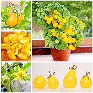 Anpanman Doll - 100 Pcs Yellow Gold Pear Tomato Fresh Garden Bonsai Organic Delicious Nutritious Juicy Fruit Vegetable 95% Germination (Tree Seed) - by Abuldahi