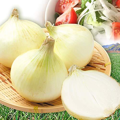 国華園 淡路島産 新たまねぎ 10�s 1組 野菜