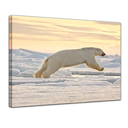 Wandbild Eisbär im Sprung - 60x50 cm Bilder als Leinwanddruck Fotoleinwand Tierbild Jäger - Arktis - weißer Eisbär am Polarkreis