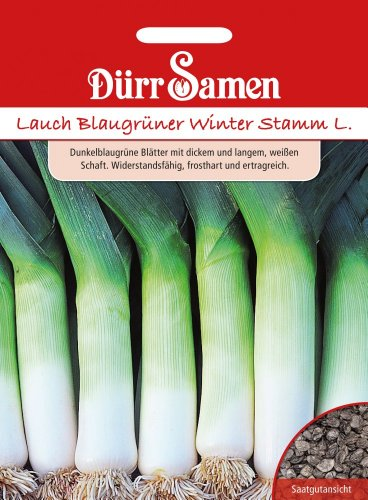 Dürr-Samen Lauch Blaugrüner Winter Stamm L.