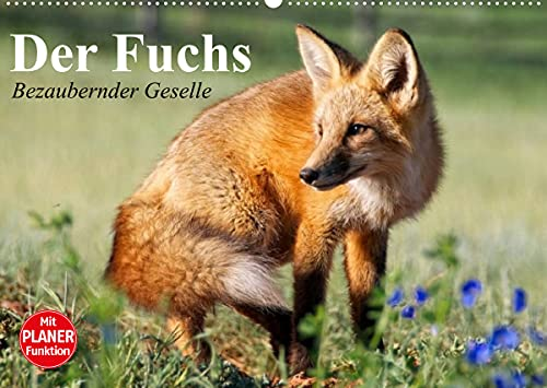 Der Fuchs. Bezaubernder Geselle (Wandkalender 2022 DIN A2 quer): Fröhliche Rotfüchse beim vergnügten Spiel mit Hunden (Geburtstagskalender, 14 Seiten ) (CALVENDO Tiere)