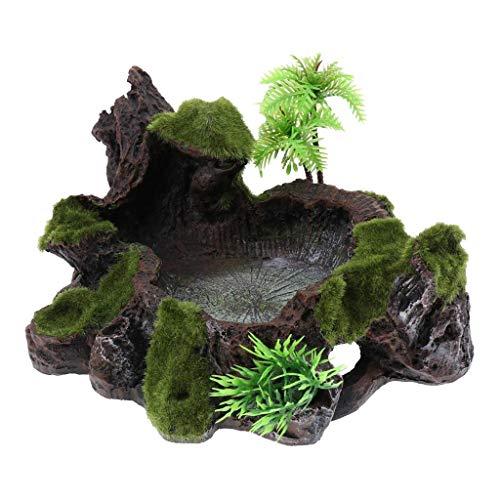 Fliyeong Moos Dekoratives Reptil Feste und stabile Harzschale Lebensmittel Wasserschale Bartagame Gecko Eidechse Mahlzeit Wurmfutter Terrarium Habitat Zubehör Langlebig u