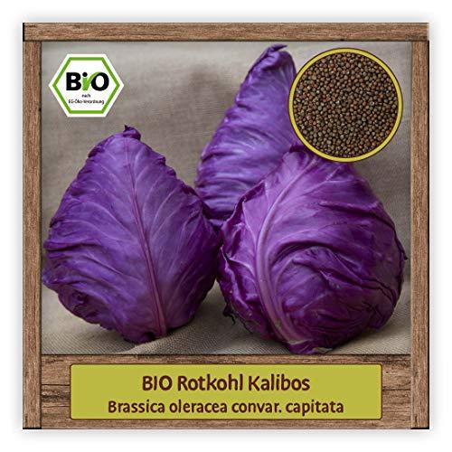 BIO Spitzkohl Samen Rotkohl Gemüsesamen Kalibos zum Pflanzen