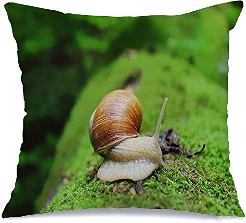 Pillow Cover Decorative Pillowcase Helix Pomatia Brown On Mossy Ferns Spiral Forest Closeup Food Green Tree Animals Wet Wildlife Wild Linen Comfortable Square Cushion Case for Car Couch 16x16 Inch