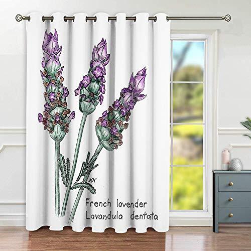 ZIJINJIAJU Verdunkelungsvorhange,French Lavender Lavandula Dentata Botanical Drawing In Colored Pencil,Wohnzimmer,Schlafzimmer,Vorhang,Familienleben,Dekoration