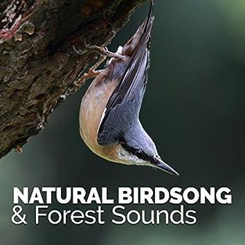Natural Birdsong & Forest Sounds