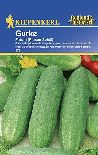 Salatgurken Fatum (Riesen Schäl)