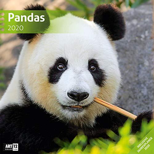 Pandas 2020, Wandkalender / Broschürenkalender im Hochformat (aufgeklappt 30x60 cm) - Geschenk-Kalender mit Monatskalendarium zum Eintragen