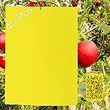 40 lavagne gialle per insetti, trappole per chiocciole, spine gialle per colla brina, contro zanzare, afili, nematodi, mosche bianche e mosche per miniera, adesivo giallo di alta qualità