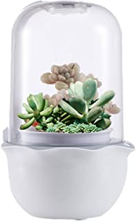 E SUPEREGROW Succulents Smart Grow Pods Planter Box Home Office Tabletop Garden with LED Plant Smart Grow Light and Timer All-in-one Smart Succulents Planter Indoor Gardening Kit