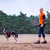 DogFit® Canicross Starter Kit to start running with your dog - Dog harness, Waistbelt, Bungee Line, Kitbag, Starter Guide (XXS)