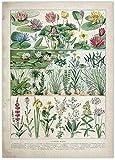Cartel educativo botánico Setas Champiñones Identificación Gráfico de referencia Diagrama Ilustración Arte de la pared Lienzos 40x60cm / Sin marco-H