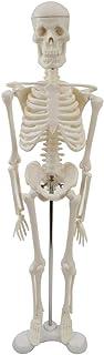 Outgeek Skeleton Model Creative Realistic Resin Human Anatomical Model