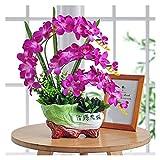 Decoración de la habitación Planta artificial en maceta Orquídea Artificial Planta Falta Orquídea Planta con interesante maceta de cerámica Interior Interior Lucky Decoration Ornaments Perfecto Regalo