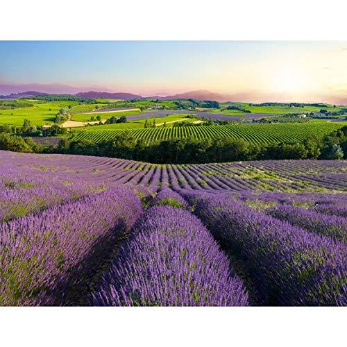Fototapete Provence Landschaft Natur 352 x 250 cm Vlies Tapeten Wandtapete XXL Moderne Wanddeko Wohnzimmer Schlafzimmer Büro Flur Grün Beige 9022011b