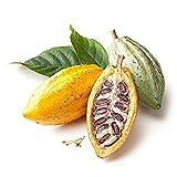 Centraliain Graines de cacao, 40 graines de cacao, germination, décoration de plantes de jardin