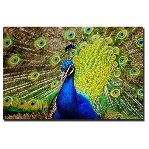 QWESFX Pfau Wandkunst Poster und Drucke Bunte realistische moderne Tiere Leinwand Malerei Pfau Wandbilder für Wohnzimmer (Druck ohne Rahmen) D 60x90CM