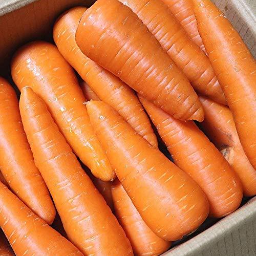 無農薬にんじん 10kg 国産 ジュース用人参 有機栽培