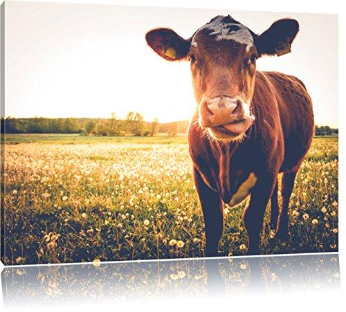 Pixxprint Einzelne Kuh auf Butterblumenwiese in der Abendsonne, Format: 100x70 auf Leinwand