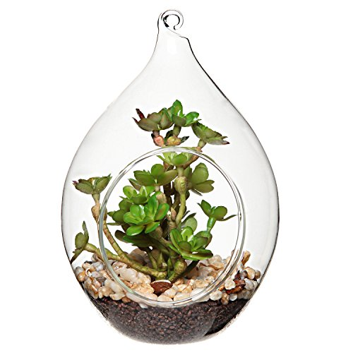 Globe glass terrarium for succulents