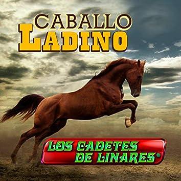 Caballo Ladino