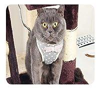 ハバネラ猫コード胸ストラップベストリーシュ&リーシュ反射子猫猫ウォーキングナイロンパピーカラーチェストストラップ小型犬用