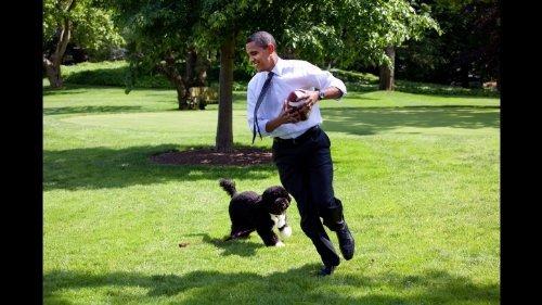 Photo Barack Obama White House Playing Football w Bo