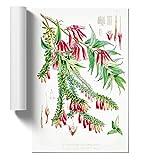 BIG Box Art W. H. Fitch Himalaya-Pflanzen XV Poster