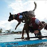 EzyDog Seadog Hunde-Schwimmweste, Größe M, rot - 3