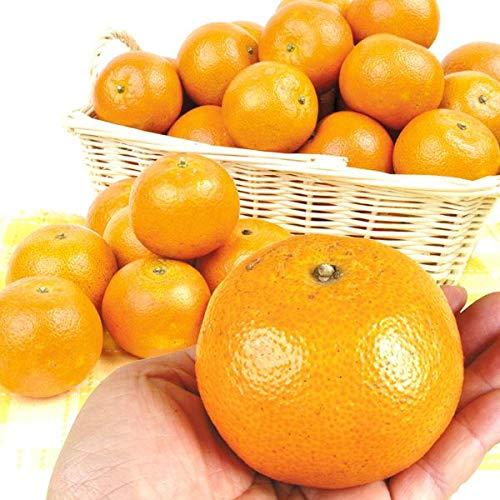 国華園 食品 鹿児島産 タンカン 5�s1箱 柑橘