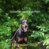 Doberman Pinscher Calendar 2021