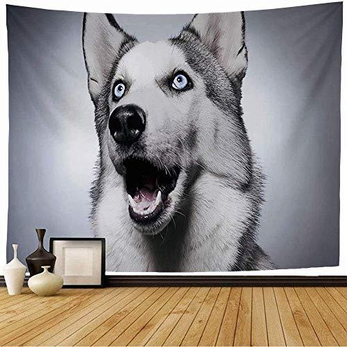 Tapiz de Pared Tapestry Azul, feliz, husky siberiano, estudio, disparar, animales, fauna, naturaleza, lobo, perro, adorable, alaska, solo, piel Wall Hanging 80X60inch