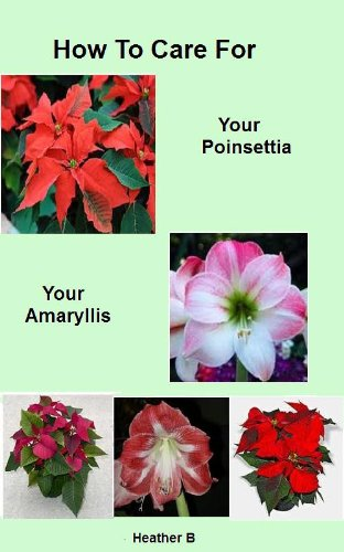 How To Care For Your Poinsettia Your Amaryllis (English Edition)