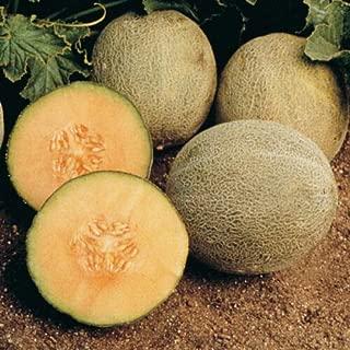 12+ Cantaloupe Seed: Ambrosia Cantaloupe Fresh Seed