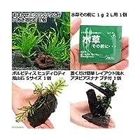 (水草)置くだけ簡単 レイアウト3種セット ver2(1セット) 本州四国限定