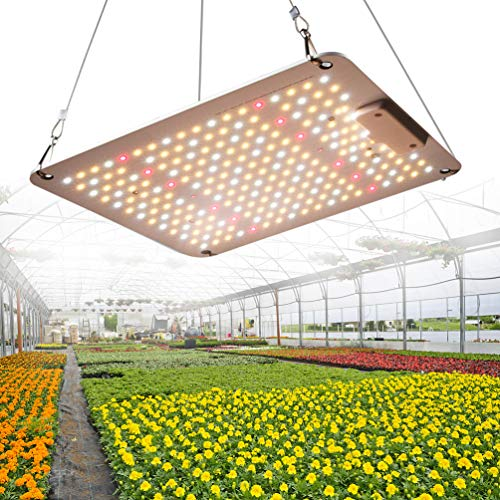 1000W LED Grow Light 2x2ft Sonnenähnliches Vollspektrum Grow Light Pflanzen Wachsende Lichter für Hydroponic Indoor Seeding Veg Flower Grow Zelt und Bloom Greenhouse Growing Lamp mit MeanWell-Treiber