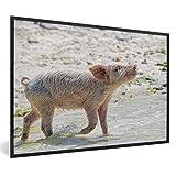 Poster mit Rahmen Pig Beach Bahamas - Genießen Schwein