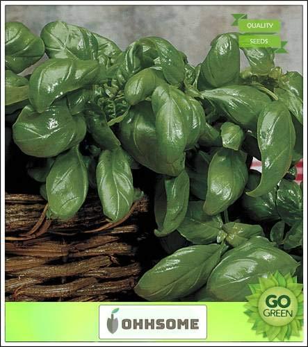 Pinkdose Herb Semences pour la cuisine italienne de jardin - Basilic paquet de graines aromatiques Graines Pour Semer Kitchen Garden Seeds Paquet de semences